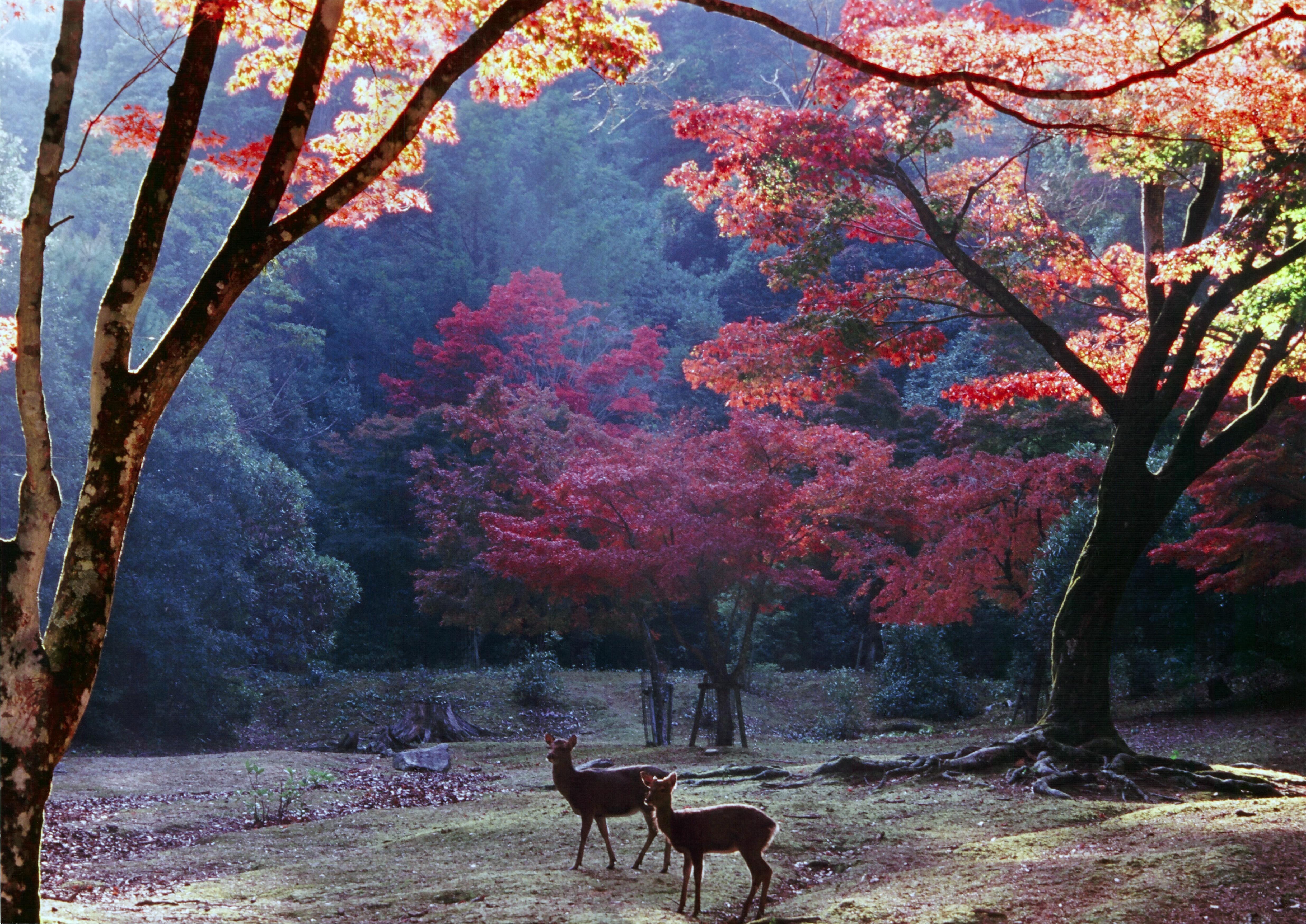広島で手ぶらでキャンプ