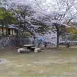 春には桜が咲きます