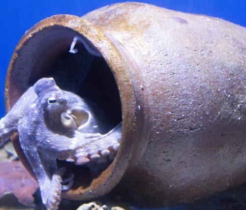 タコ壺漁・さし網漁
